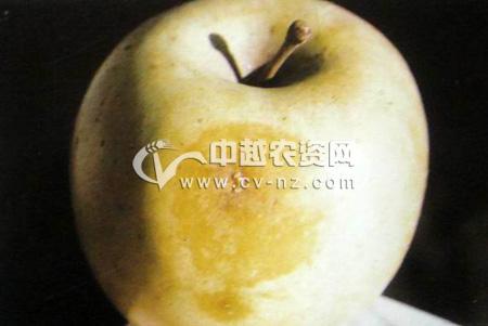 苹果水心病