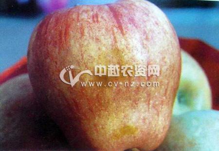 苹果褐烫病