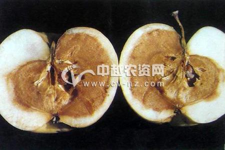 苹果果肉褐变病