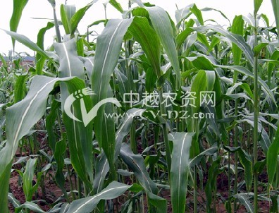 农业种植结构调整