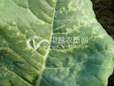 花椰菜病毒病