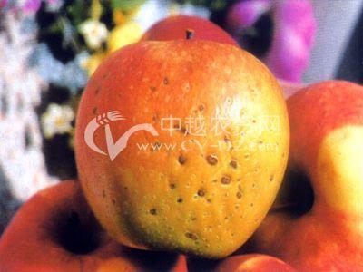 苹果泡斑病