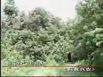 杨梅丰产栽培技术