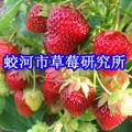 蛟河市草莓研究所