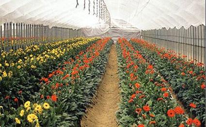 花卉专用多功能棚膜
