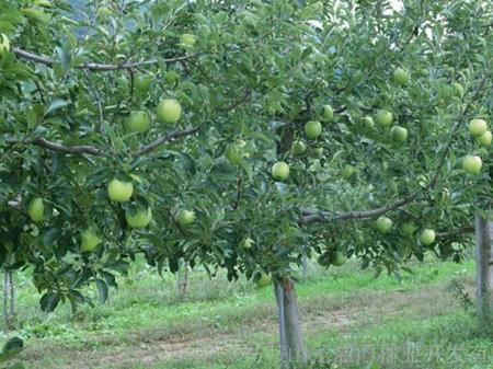 果树病虫害的主要措施,但作为一种辅助手段,把一些农业的,物理的,生物