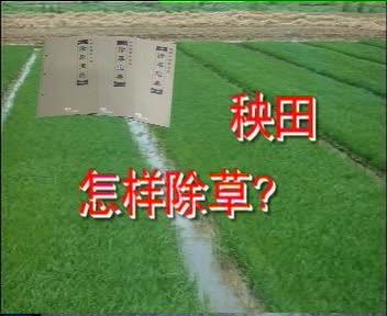 秧田怎样除草?