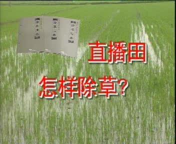 直播田怎样除草?
