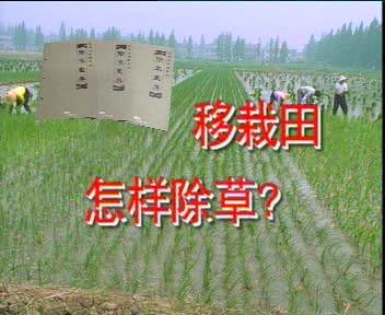 移栽田怎样除草?