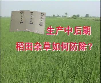 生产中后期稻田杂草如何防除?