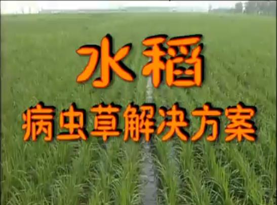 水稻病虫草解决方案1