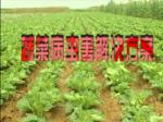 蔬菜病虫害解决方案1