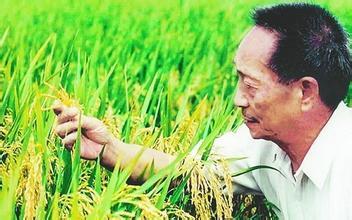 袁隆平超级稻新品种在陕西汉中试种成功