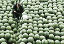 吉林团组织帮农民卖出五百万斤滞销西瓜