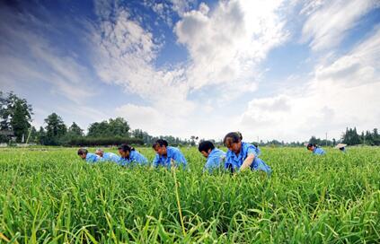 农业气象年景总体较好 需关注区域性灾害风险