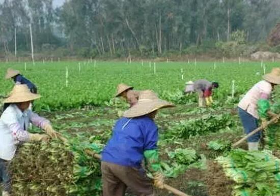 农业部副部长屈冬玉:中国特色农业信息化的思考