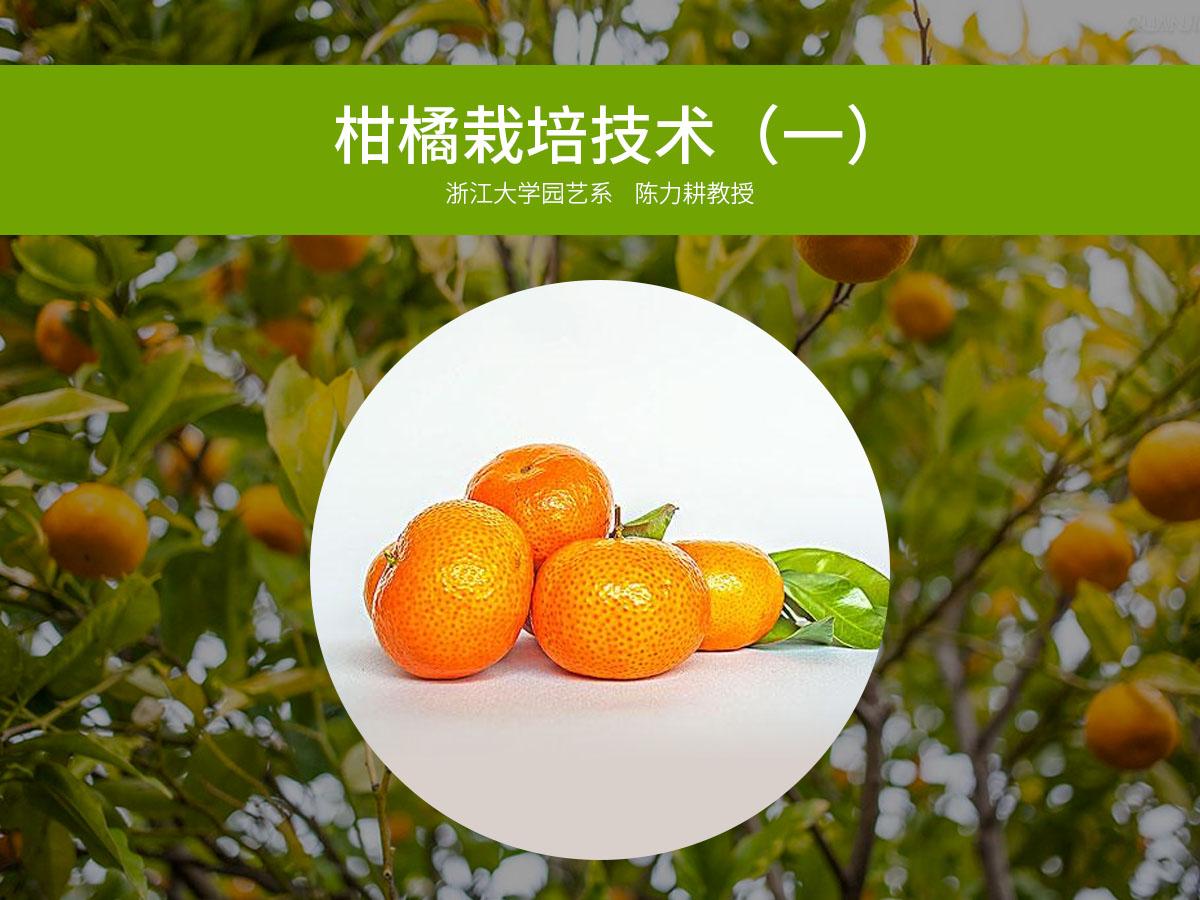 柑橘优质高效栽培技术(一)