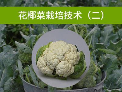 花椰菜栽培技术(二)