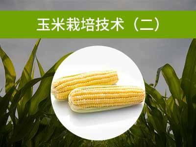 玉米栽培技术二