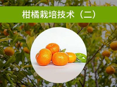 柑橘优质高效栽培技术(二)