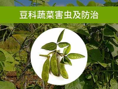 豆科蔬菜害虫及防治