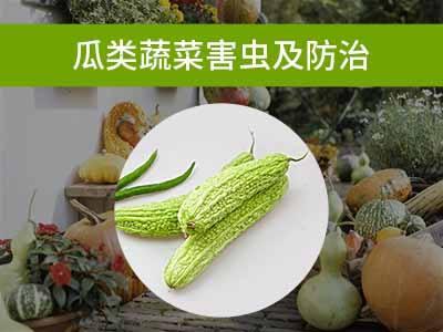 瓜类蔬菜害虫及防治