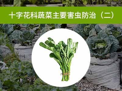 十字花科蔬菜主要害虫防治二