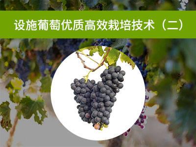 设施葡萄优质高效栽培技术二