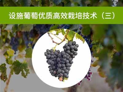 设施葡萄优质高效栽培技术三