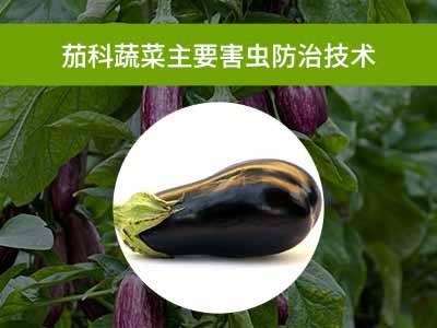 茄科蔬菜主要害虫防治技术