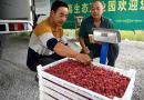 小小红树莓 扶贫大产业