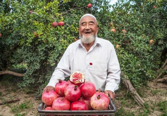 """新疆:瓜果种植铺就""""七彩脱贫路"""""""
