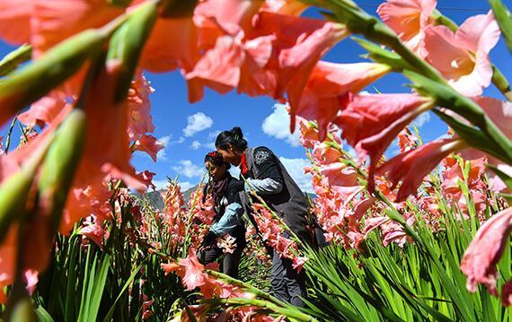 西藏:特色种植助农增收