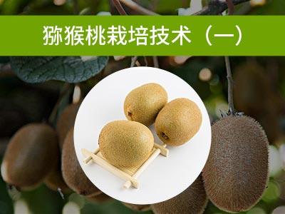 猕猴桃栽培技术(一)