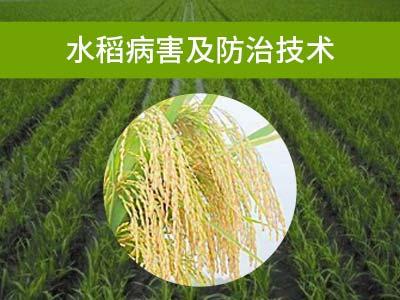 水稻病害及防治技术