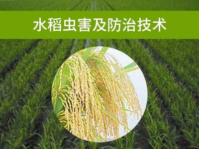 水稻虫害及防治技术