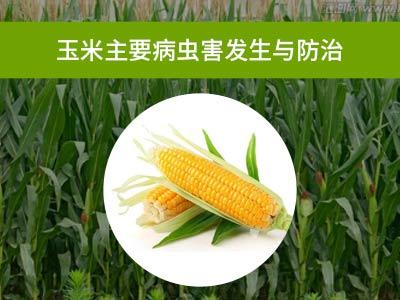 玉米主要病虫害绿色防控技术