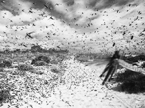 全国农区蝗虫可持续治理会议提出全力做好2018年蝗虫防控