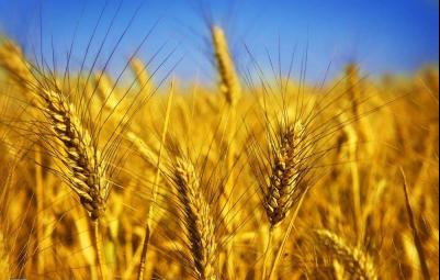 浙江省农合联、供销社发布关于贯彻落实乡村振兴战略大力提升为农服务和合作经济的实施意见