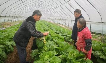 柯城区新型庄稼医院医生下乡巡诊冬季蔬菜病虫害