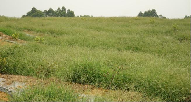 水肥杂草管理