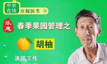 """常山胡柚专科医院举办""""胡柚春季种植管理""""培训会"""