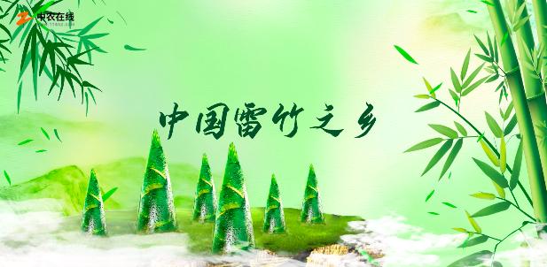 中国雷竹之乡-临安太湖源镇