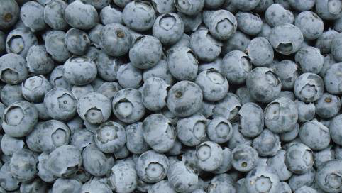 蓝莓贮存、装卸、运输缓解注意事项