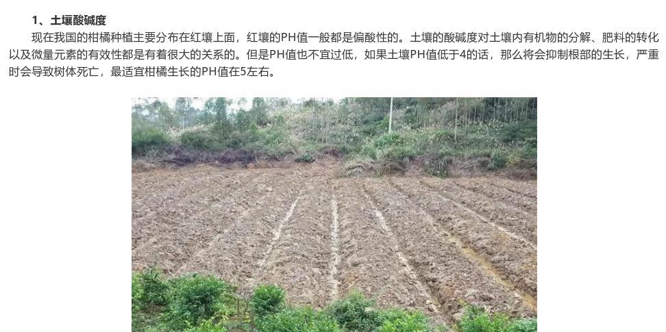 柑橘种植时对土壤有什么要求?怎么才算合格的土壤